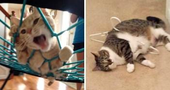 ハマってる猫さん