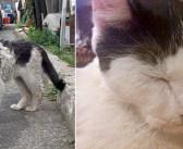 フラフラの状態で、通りがかりの女性に助けを求めてきた猫。手を差し伸べてくれたのが、とっても嬉しくて… (9枚)
