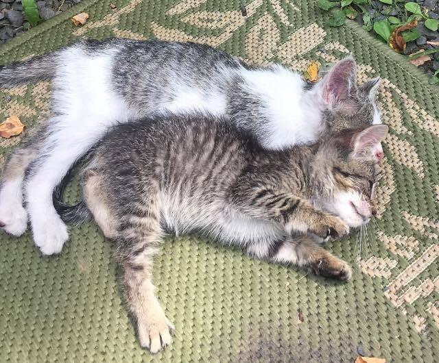 眠る2匹の子猫