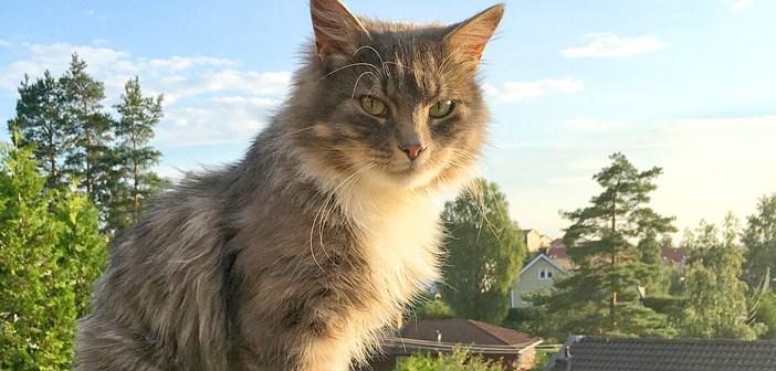 ある日、家の庭で飼い猫に似ている猫を発見! 堪らず猫を保護すると、家の中が幸せいっぱいに! (8枚)