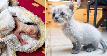 幼くして保護された子猫