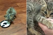保護された小さな猫