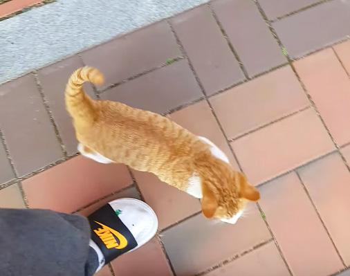 離れない猫