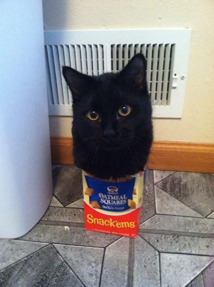 猫と小さな箱