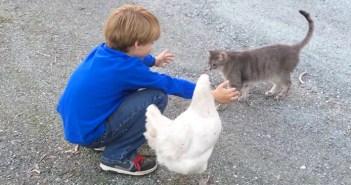 男の子とニワトリと猫