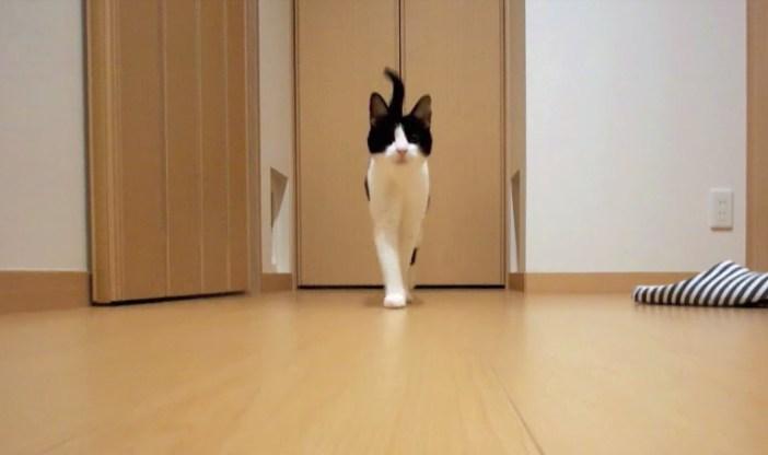 迎えにくる猫
