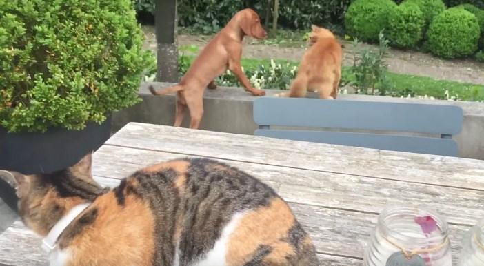 猫と遊びたい犬
