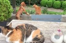 友達の犬を助ける猫