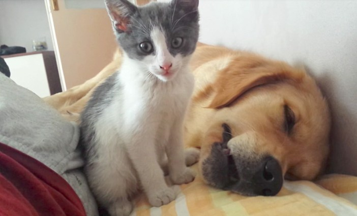 犬と遊びたい子猫