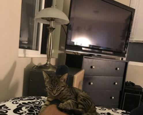 足の上の猫