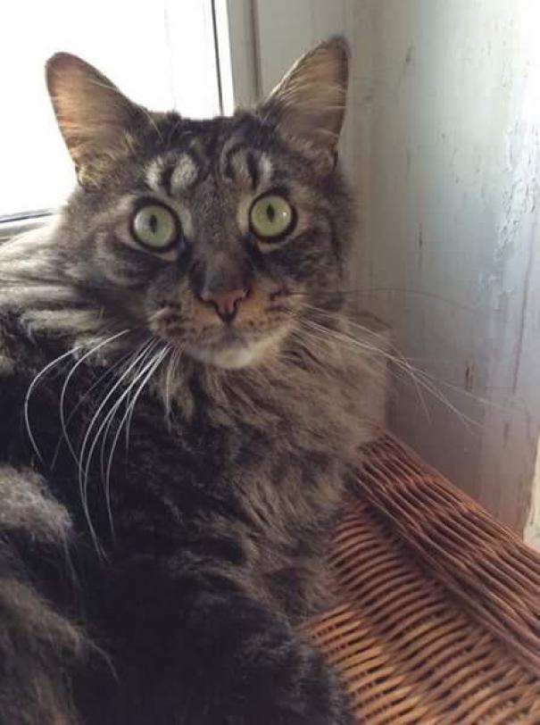 目の上に目の猫