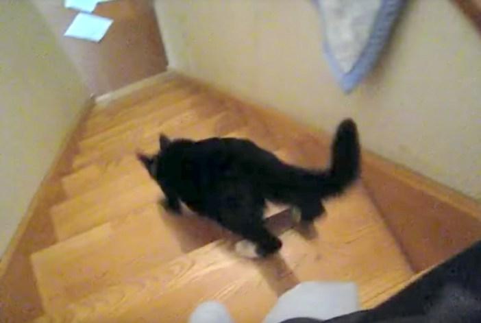 駆け下りる猫