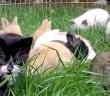 仲良しなウサギと子猫