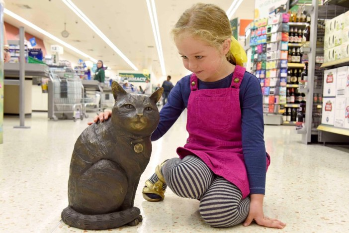 猫を撫でる少女