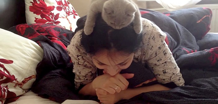 頭の上の猫