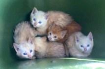 ゴミ箱から発見された子猫達