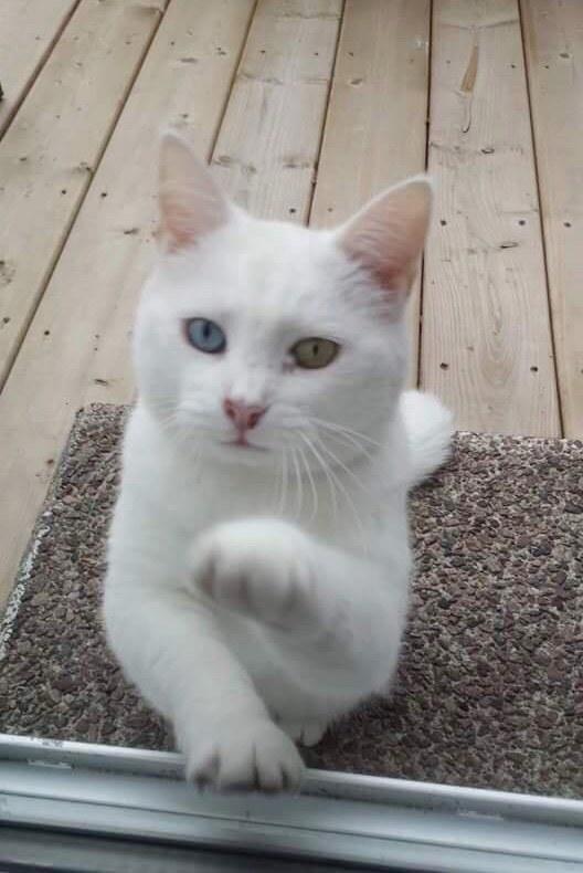 開けて欲しそうな猫