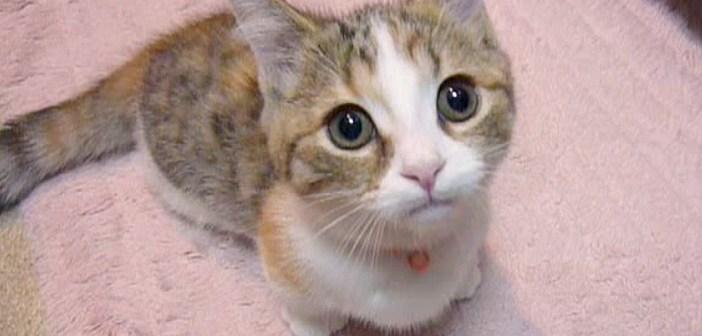 ご飯を要求する子猫