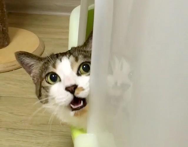 話しかけてくる猫