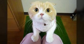 見つめてくる猫