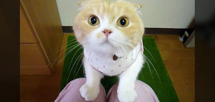 「ねぇ、抱っこして!」と真剣な顔でおねだりしてくる猫さん。飼い主さんが抱っこを断っていると… (ㆁωㆁ)!
