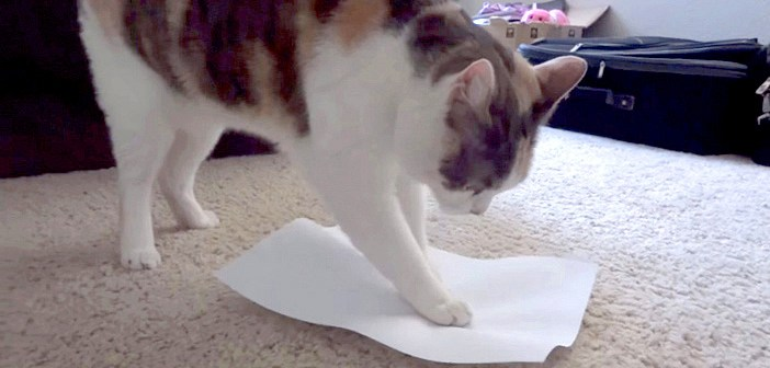 紙を伸ばして座る猫