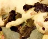 世話してもらったお礼に、プレゼントを持って来た野良猫。そんな猫を家族に迎えると… 可愛い出来事が (*´ω`*) 7枚