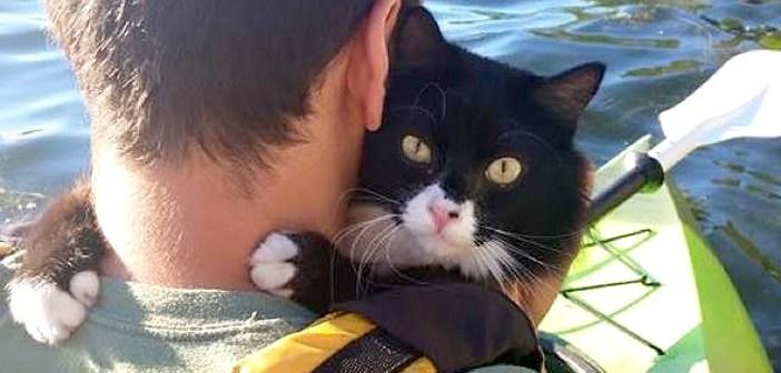 アウトドア好きの猫