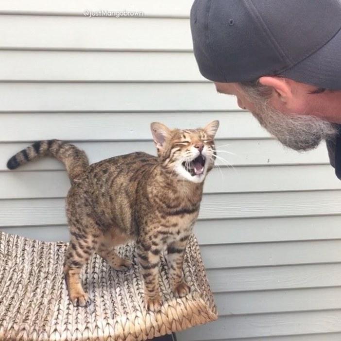 男性と会話する猫