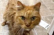 20歳の猫