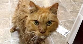悲しい最期を迎えようとしていた20歳の老猫。温かい家族に迎えられて… 幸せいっぱいの姿を見せてくれた (*´ω`*) 5枚