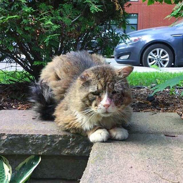 ボロボロの猫