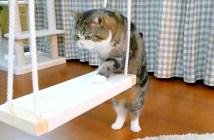 ブランコに乗る猫