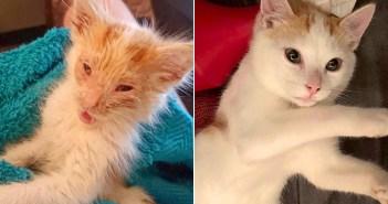 子猫に大きな変化