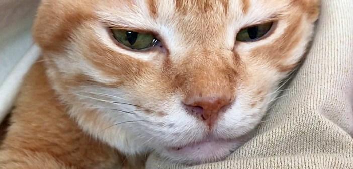 人をダメにする猫