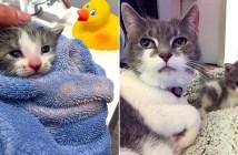 子猫とおばあちゃん猫