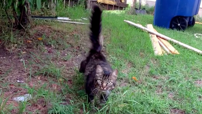 行方不明の猫