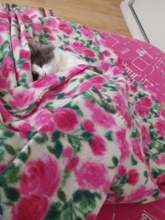 布団でくつろぐ猫