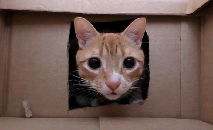 覗いてくる猫