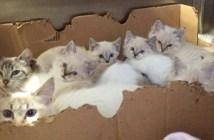2匹の母猫と7匹の子猫
