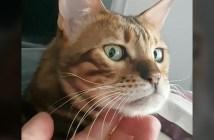 ナデナデを意識する猫