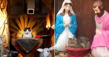 どうしてそんなところに!? キリスト誕生を再現したジオラマの中に、ちゃっかり入り込んじゃった猫さん達 32選