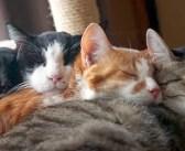 ふと見ると、ベッドの上に可愛い『猫団子』が♪ 冬の猫達の仲良しそうな姿に心がポカポカ温まる (*´ω`*)♡