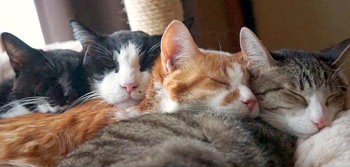 温かそうな猫団子