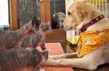 犬に出会った子猫