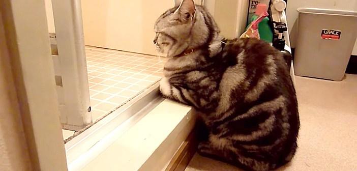 お風呂を待つ猫
