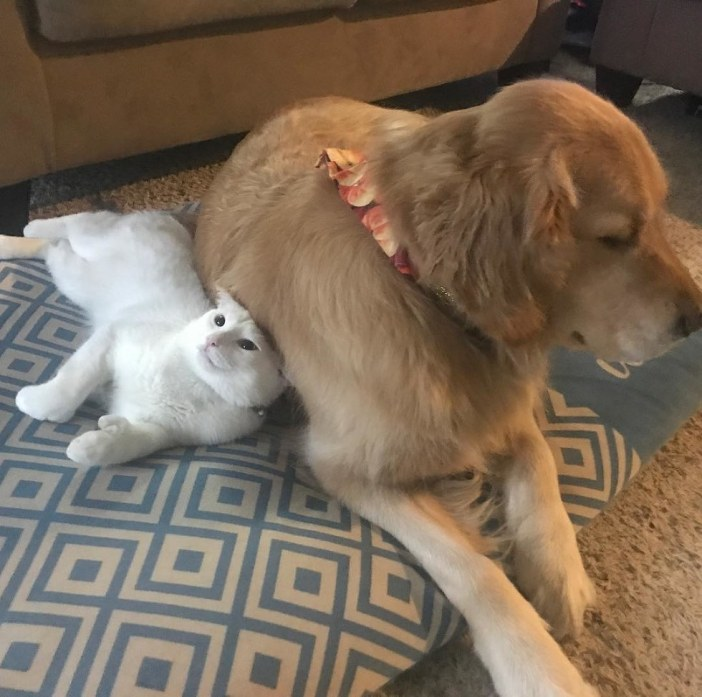 寄り添う犬と子猫