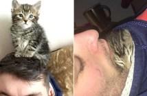 パーソナルスペースと子猫