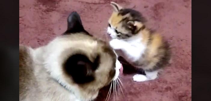 兄猫と子猫