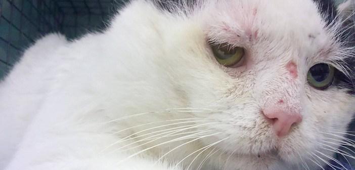 12年間も野良猫として生きてきた老猫。多くの人の優しさで、ついに安住の地を見つける (6枚)